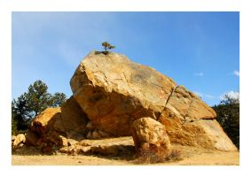 Pine Tree Riding a Boulder by manwithashadow