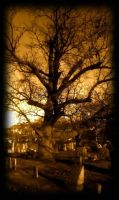 Cemetery tree by Typo401