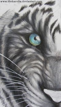 White tiger _ In Progress by TheKarelia