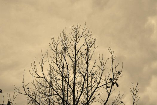 Halloween Branches by Wraith-Absconsus
