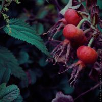 reds 2 by gremo-photography