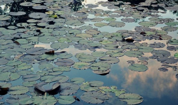 waterlilies and clouds in tune by saguara