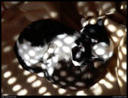 Ying Yang Dotted Cats by danielnikolic
