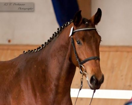 Freejumping Championship 2014_97 by CalyHoney