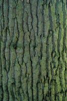 Bark texture_020 by BlokkStox