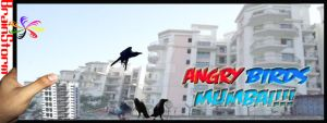 Angry Birds Local by d1pran