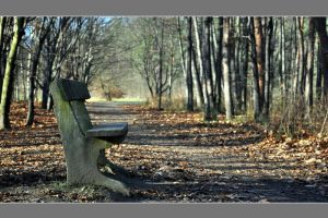 Again, I met bench by tomsumartin