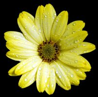 Yellow on Black by Mark-Allison