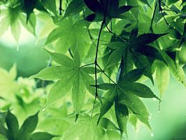 Green Leaves by Lileya