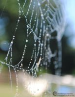 Spider Web 1 by Savellla