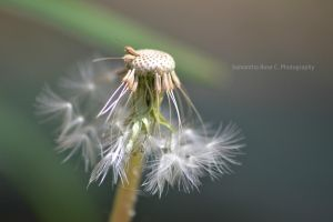 My wish is almost out by SamanthaRoseCPhoto