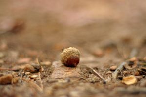 Solitary Acorn by jndphotography