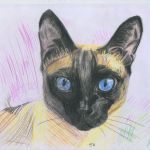 Study of a cat by Meertogh