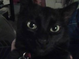 Aaron's cat, Jack's cute kitty face by Magic-Kristina-KW
