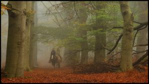 Riding in a misty forest by Esperimenti