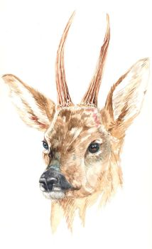 The deer by emalterre