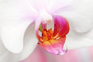 Orchid close by st3rn1