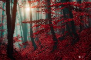 land of elves by ildiko-neer