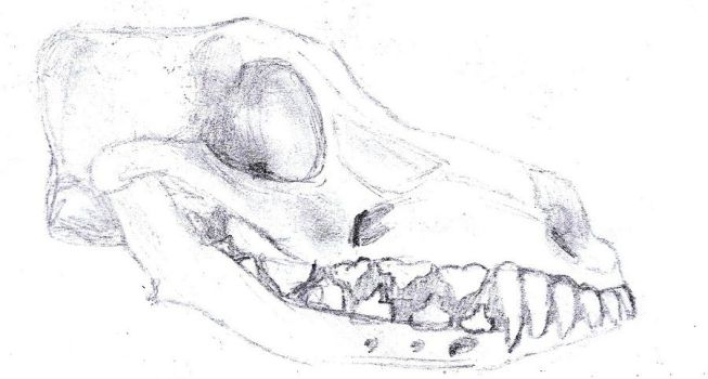 dog skull 1 by LarasSilverStars