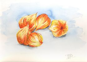 Physalis by pica-ae