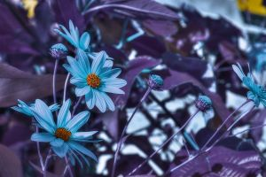 Avatar flowers - hdr by yoctox