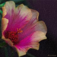 Aesthetically Texturized Flower by BettyBoopRox