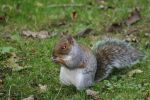 Demon Squirrel by Usurp73