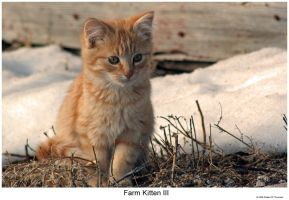 Farm Kitten III by hunter1828