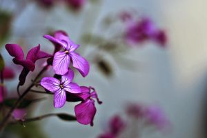 Blume by toelle-photography