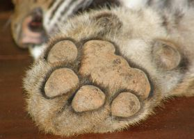 Tiger Feet by Jenvanw