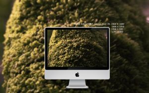 Moss wallpaper pack by ExExic