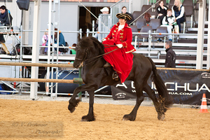 Sidesaddle Friesian_14 by CalyHoney