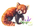 Sketchbook.013 - Red Panda by Bluepisces97