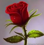 rose by Draakh