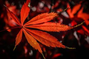 autumn leaves. by diamondaria