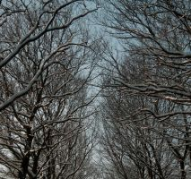 snow on the trees by xMaritjee