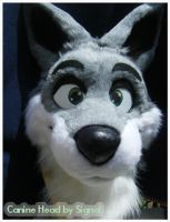 Gray, white Canine head by DogSong