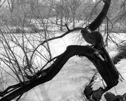 Central Park Winter 1988 by photoscot