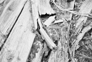 Rotting Wood- B and W by Chris01125