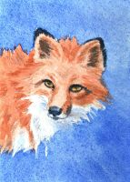 ATC Red Fox Portrait by waughtercolors