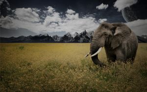 Elephant Sanctuary by Cal-iber