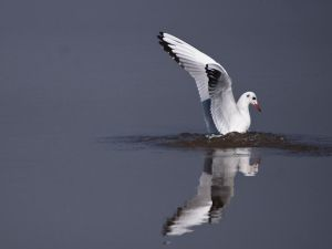 Mirrored Catch by InayatShah