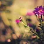 Purple by odpium