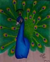 Peacock.. by preethi524