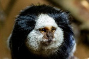 monkey by nigel3