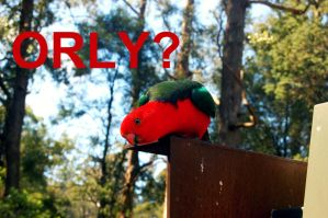 ORLY? Parrot by WinterCookie