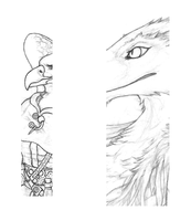 White tailed eagle and Sergal - WIP by Qzurr
