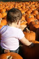 Looking to the sea of pumkins by CKing