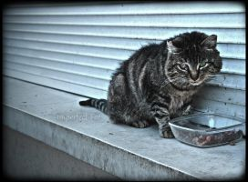 The Cat from the Street by Ilmatarja