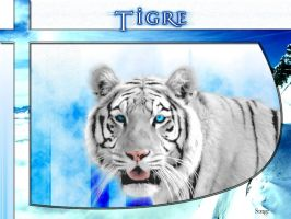 Tigre by songe